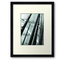 spikes of decorative grass Framed Print