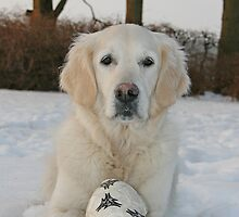 Ditte in the snow with her ball by Trine