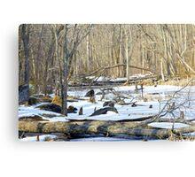 The Winter Swamp Canvas Print