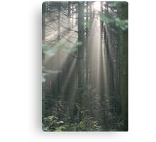 Astrup Woods Morning Canvas Print
