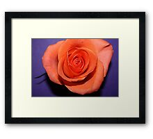 Purple peach Framed Print