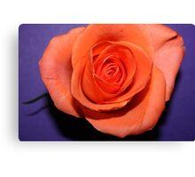 Purple peach Canvas Print