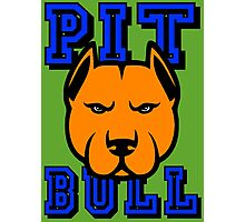 PIT BULL-22A Photographic Print