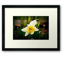 Early bloomer Framed Print