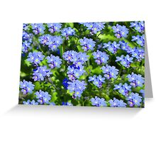 Forget Me Not - Macro Greeting Card