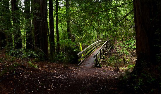 Bridge in the Redwoods by Zane Paxton