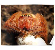 Arachnid with egg sac Poster