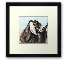 Nubian Goat Colored Pencil  Framed Print