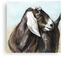 Nubian Goat Colored Pencil  Canvas Print