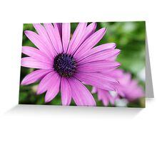 Closeup photo of purple daisy Greeting Card