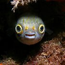 Smiling Puffer by Carolien Mermans