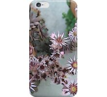 Blooming hens and chicks iPhone Case/Skin
