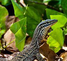 Monitor Lizard by Ben Breen