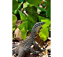 Monitor Lizard Photographic Print