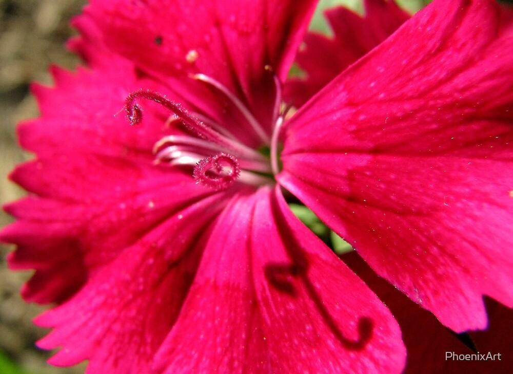 Pink Stamen by PhoenixArt