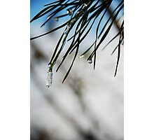 Pine Frost Photographic Print