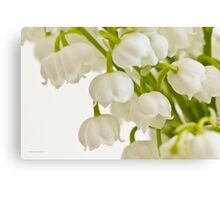 Lily Of The Valley - Macro  Canvas Print