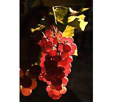 The Taste of Sunlight Photographic Print