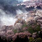 Cherry  Blossom  , Nara  Yoshino , JAPAN by yoshiaki nagashima
