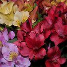 Spring Flowers -- Artistic by Scott Englund