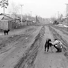 Street Dogs by Danim