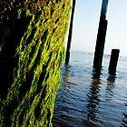 Growing Fat on a Shoreline Pier by UrbanPortraits