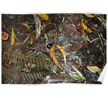 Snail's Pace on the Rainforest Floor - Otway Ranges Poster