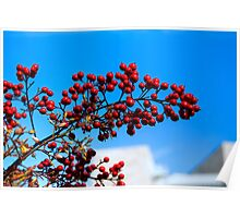 Getty Berries Poster