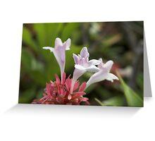 Hedge Flower Greeting Card