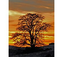 Black Locust Sunset Photographic Print
