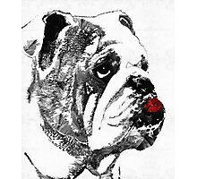 Bulldog Pop Art - How Bout A Kiss 2 - By Sharon Cummings Photographic Print