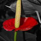 Just a Little Red by Kylie Van Ingen