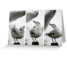 Seagull vs Seagull Greeting Card