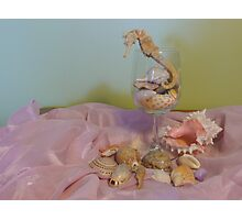 An Assortment of My Favourite Shells, and a Seahorse. Photographic Print