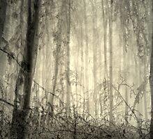 Magic forest 3 by Patricia Ausweger Matz