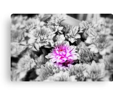 Focal Black and White. Canvas Print