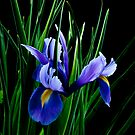 I just love blue by George Swann