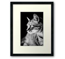 Cat Waiting The Right Moment Framed Print