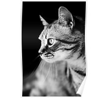Cat Waiting The Right Moment Poster