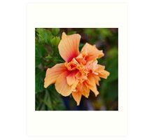 Soft Hibiscus Art Print