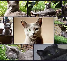 The working day of a Russian Blue   by DutchLumix
