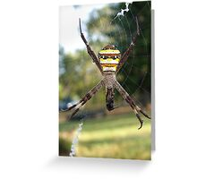 St Andrews Cross Spider Greeting Card