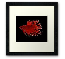 Life in a fish bowl Framed Print