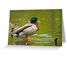 Proud As A ......Duck Greeting Card