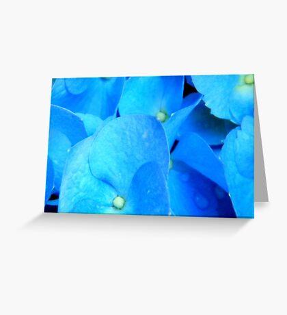 MACRO- Hydrangea ^ Greeting Card