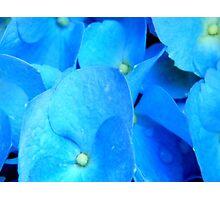 MACRO- Hydrangea ^ Photographic Print