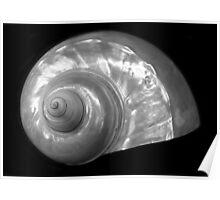 Shell A, Spirals Series Poster