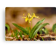 Dogs Tooth Lily - Erythronium Metal Print