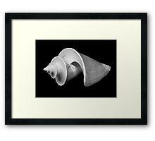 Shell C, Spirals Series Framed Print