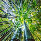 Bamboo 02 by MightyGeekMan